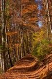 Percorso del terreno boscoso in autunno - Trentino Italia Fotografia Stock Libera da Diritti