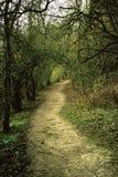 Percorso del terreno boscoso in Chipstead Immagine Stock Libera da Diritti