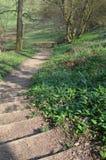 Percorso del terreno boscoso in Inghilterra durante la primavera Fotografia Stock