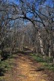 Percorso del terreno boscoso in inverno Fotografia Stock Libera da Diritti