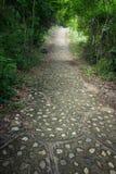 Percorso del vicolo del passaggio pedonale con gli alberi verdi sulla montagna Fotografia Stock Libera da Diritti