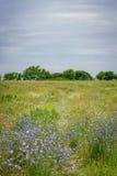 Percorso del wildflower del paese Fotografie Stock Libere da Diritti