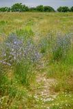 Percorso del wildflower del paese Fotografia Stock