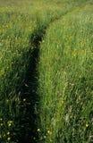 Percorso dell'erba. fotografia stock
