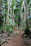 Percorso 7 della foresta pluviale Fotografia Stock