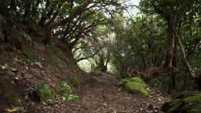 Percorso della giungla della foresta pluviale Foresta pluviale in montagne di anaga, Tenerife, isole Canarie, Spagna archivi video