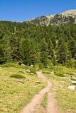 Percorso della montagna Fotografie Stock