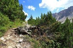 Percorso della montagna nelle montagne Immagini Stock