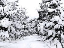 Percorso della neve Immagine Stock