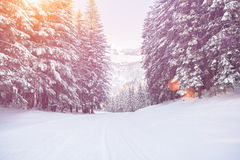Percorso della neve nel tramonto della foresta di inverno Immagini Stock Libere da Diritti