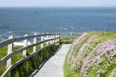 Percorso della passeggiata della scogliera e fiori selvaggi in Irlanda Fotografia Stock Libera da Diritti