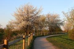 Percorso della primavera fotografie stock libere da diritti