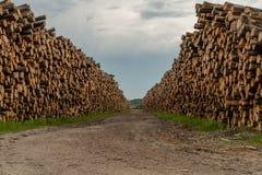 Percorso della sporcizia attraverso le pile di legno registrato fotografia stock libera da diritti