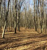 Percorso delle foglie attraverso la foresta di autunno con la toppa di cielo blu fotografia stock libera da diritti