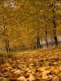 percorso di autunno Fotografie Stock Libere da Diritti