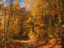 Percorso di autunno in legno. fotografia stock libera da diritti
