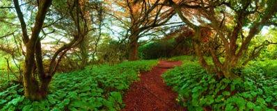 Percorso di avventura attraverso la regione selvaggia Fotografie Stock