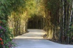 Percorso di bambù Fotografie Stock