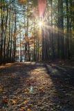 Percorso di camminata nel parco di Johnson del lago di Raleigh, NC Fotografie Stock Libere da Diritti