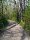 percorso di foresta Fotografie Stock