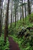 Percorso di foresta Immagini Stock