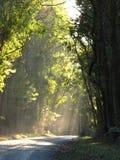 Percorso di foresta Immagine Stock Libera da Diritti