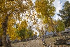 Percorso di foresta di autunno Fotografia Stock