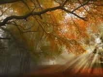 Percorso di foresta di autunno Fotografia Stock Libera da Diritti