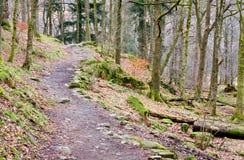 Percorso di foresta di Rydal Fotografia Stock