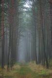 Percorso di foresta, Lituania Fotografie Stock Libere da Diritti