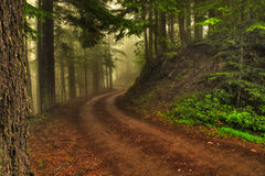 Percorso di foresta nebbioso Fotografie Stock