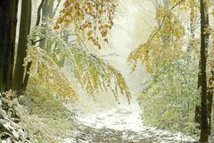 Percorso di foresta nebbioso di autunno con prima neve Fotografie Stock