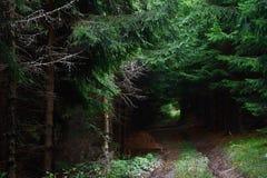 Percorso di foresta profondo Immagine Stock