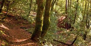 Percorso di foresta temperata fotografie stock