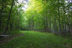 Percorso di foresta verde Fotografie Stock
