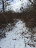 Percorso di inverni Fotografia Stock Libera da Diritti