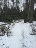 Percorso di inverni Fotografia Stock