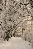 Percorso di inverno Immagine Stock
