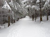 Percorso di inverno Immagini Stock Libere da Diritti