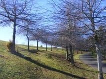 Percorso di inverno fra gli alberi fotografia stock libera da diritti