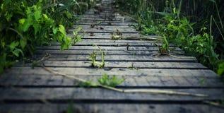 Percorso di legno Fotografia Stock