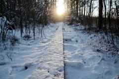 Percorso di legno con più forrest nevoso Fotografie Stock Libere da Diritti
