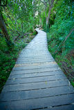 Percorso di legno del fiume della foresta di Krka fotografie stock libere da diritti
