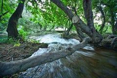 Percorso di legno del fiume della foresta di Krka immagini stock libere da diritti