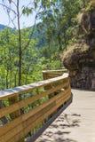 Percorso di legno nella foresta Fotografia Stock