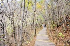 Percorso di legno nella foresta di autunno Fotografia Stock