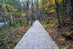 Percorso di legno nella foresta di autunno Fotografie Stock