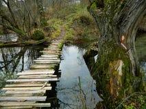 Percorso di legno nella foresta di autunno Immagine Stock