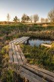 Percorso di legno sopra il piccolo stagno in giardino in molla in anticipo Immagini Stock