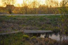 Percorso di legno sopra il piccolo stagno in giardino in molla in anticipo nel tramonto Fotografie Stock Libere da Diritti